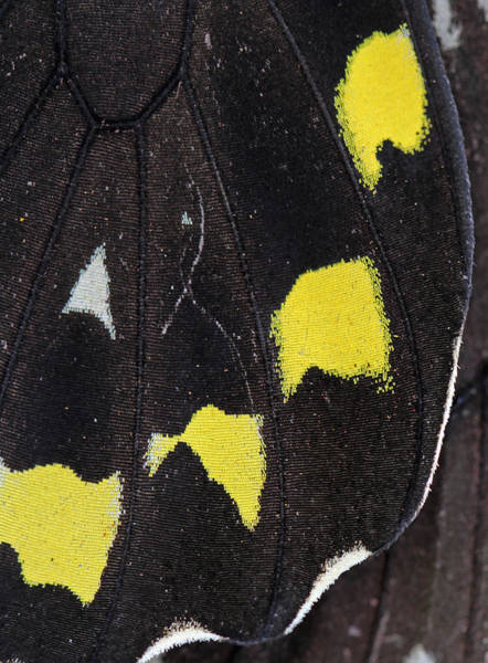 Photograph - Butterfly Wing Close Up by Juergen Roth