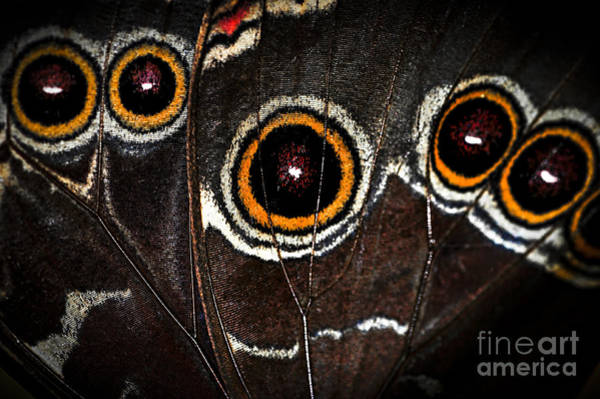 Wall Art - Photograph - Butterfly Wing by Elena Elisseeva