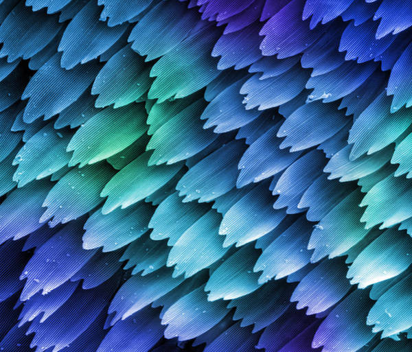 Photograph - Butterfly Wing Scales Sem X458 by Kenneth Bart/viusals Unlimited, Inc. /science Photo Library