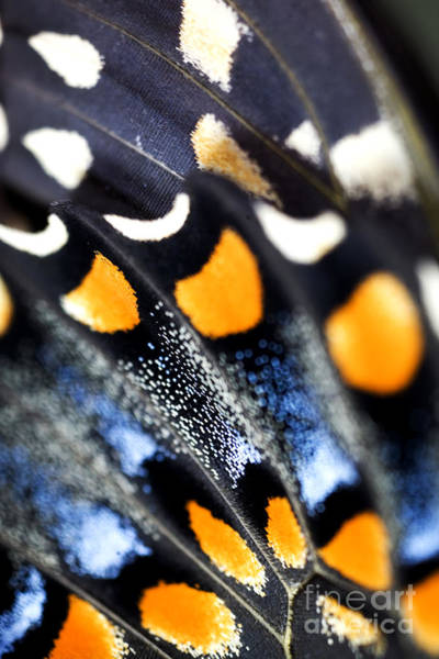 Bug Photograph - Butterfly Wings by Iris Richardson