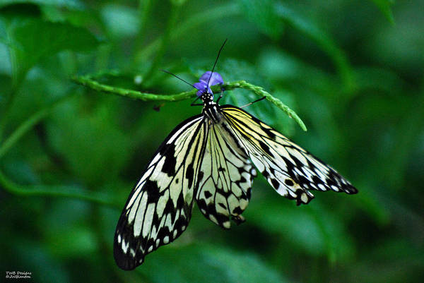 Photograph - Butterfly With Flower by Teresa Blanton