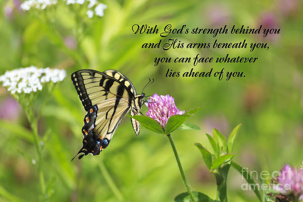 Photograph - Butterfly With Religious Quote by Jill Lang