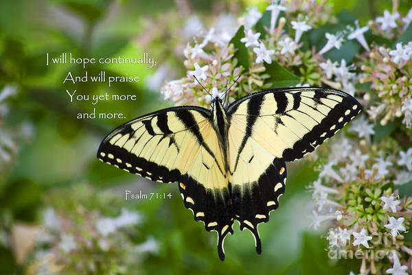 Photograph - Butterfly With Scripture by Jill Lang