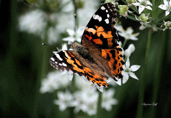 Summertime Wall Art - Photograph - Butterfly World II by Suzanne Gaff