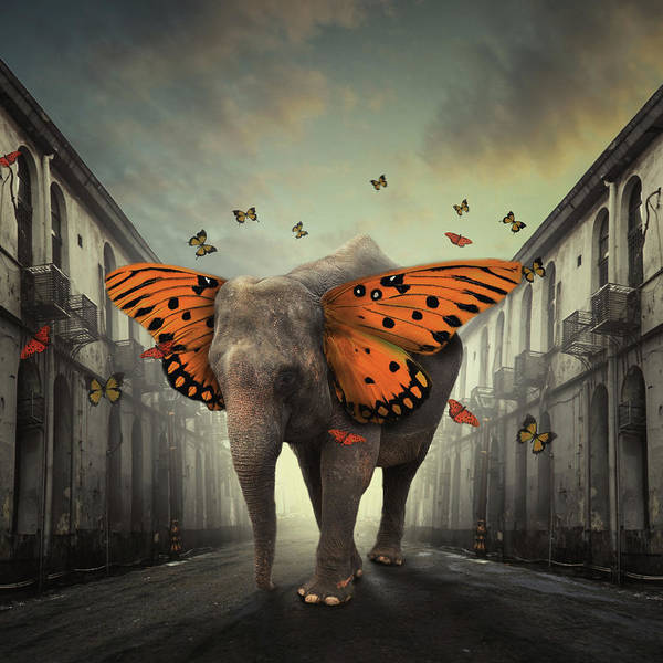 Selective Color Photograph - Butterphant by Hardibudi