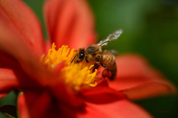 Wall Art - Photograph - Buzz Is The Word by Donna Blackhall
