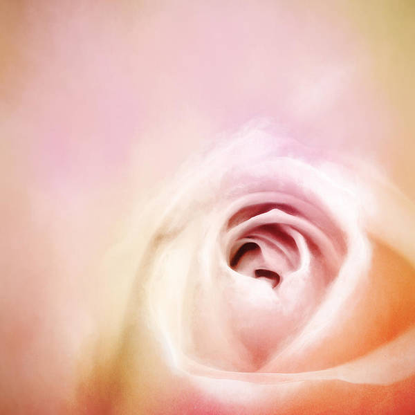Floral Digital Art - By Any Other Name by Scott Norris