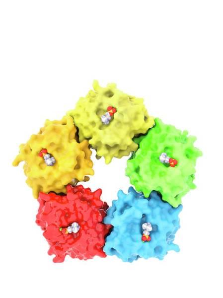 Quaternary Photograph - C-reactive Protein Molecule by Ramon Andrade 3dciencia