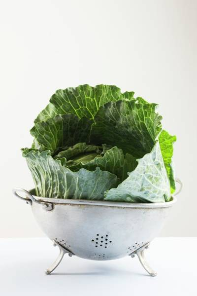 Colander Wall Art - Photograph - Cabbage Leaves In A Colander by Cristina Pedrazzini/science Photo Library