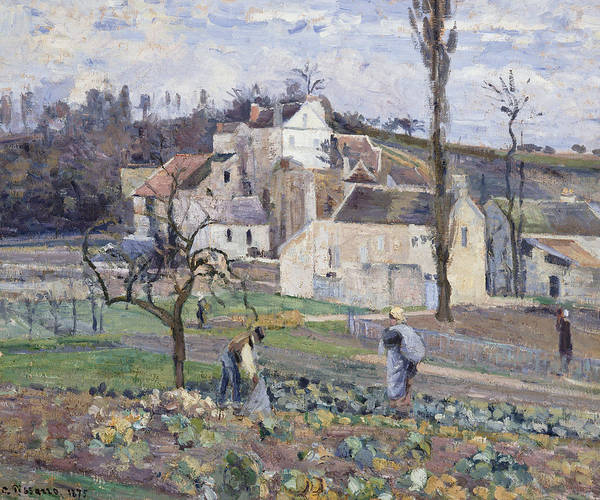 Vegetable Patch Wall Art - Painting - Cabbage Patch Near The Village by Camille Pissarro
