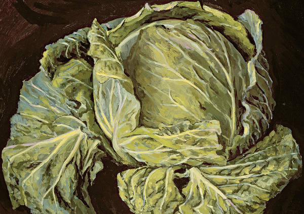 Veggies Painting - Cabbage Still Life by Vincent Yorke