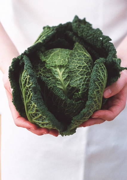 Foodstuff Photograph - Cabbage by William Lingwood/science Photo Library