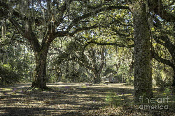 Photograph - Cabin And Live Oaks by David Waldrop