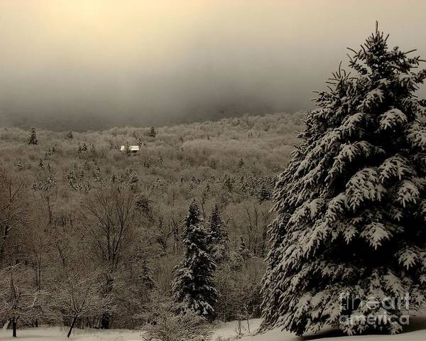 Photograph - Cabin In The Woods by Donna Cavanaugh