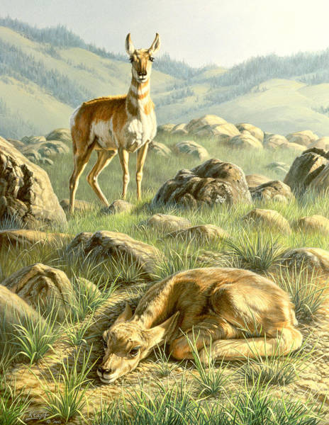 Fawn Painting - Cached Treasure - Pronghorn by Paul Krapf