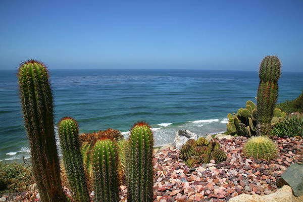 Water Photograph - Cacti In Gardens Of Fellowship Of Self by Max Paoli