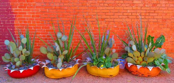 Digital Art - Cacti Quartet by Alec Drake