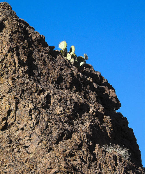 Photograph - Cactus - Chupederas - New Mexico by Steven Ralser