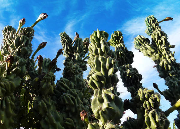 Photograph - Cactus 1 by Mariusz Kula