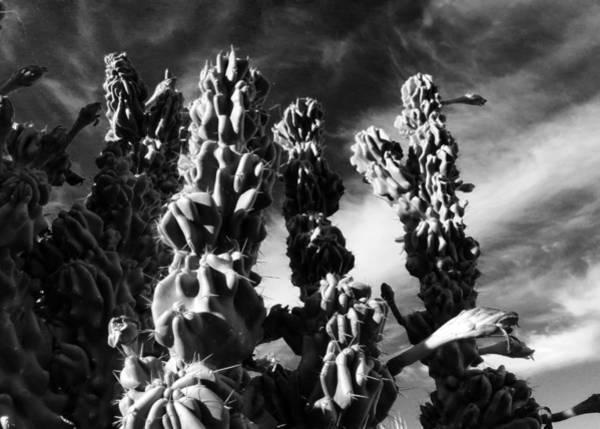 Photograph - Cactus 2 Bw by Mariusz Kula