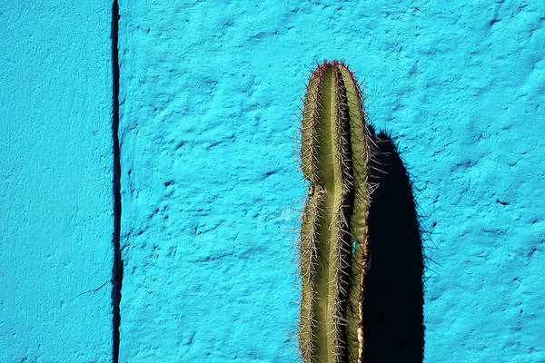 San Miguel De Allende Wall Art - Photograph - Cactus Against Blue Wall by Dennis Walton