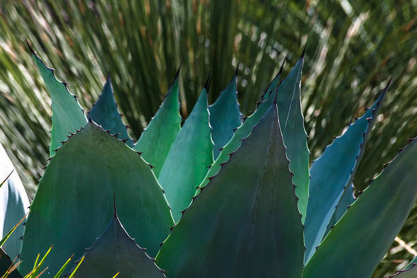 Photograph - Cactus And Grass by Ed Gleichman