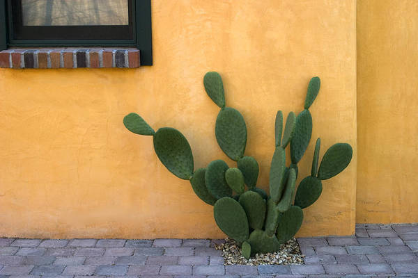 Tucson Arizona Wall Art - Photograph - Cactus And Yellow Wall by Carol Leigh