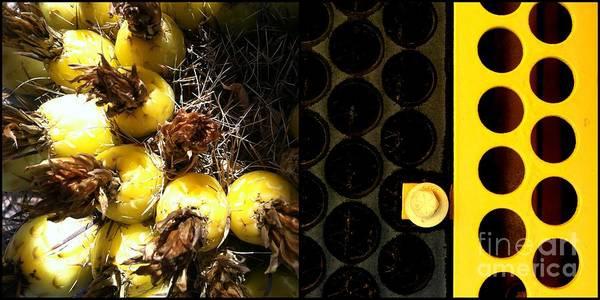 Photograph - Cactus Combo by Marlene Burns