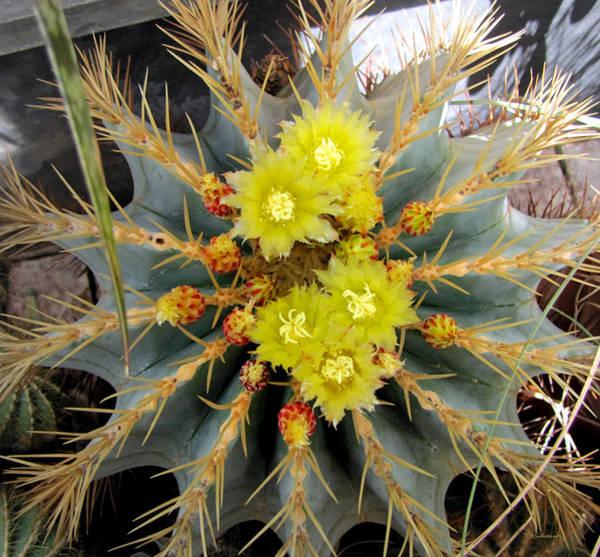 Photograph - Cactus Flowers by Duane McCullough