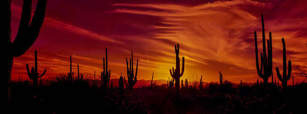 Sonoran Desert Photograph - Cactus Glow by Mary Jo Allen