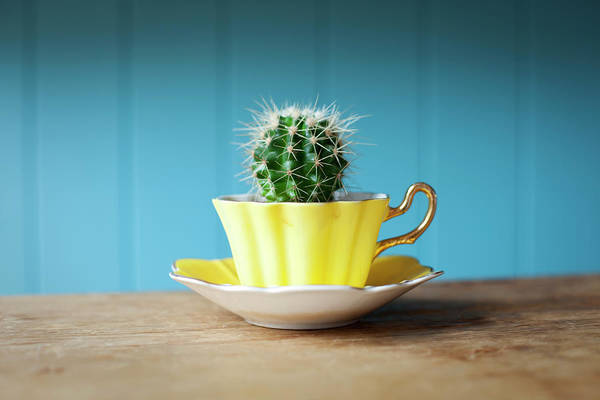Saucer Photograph - Cactus Growing In Teacup On Desk by Ian Nolan