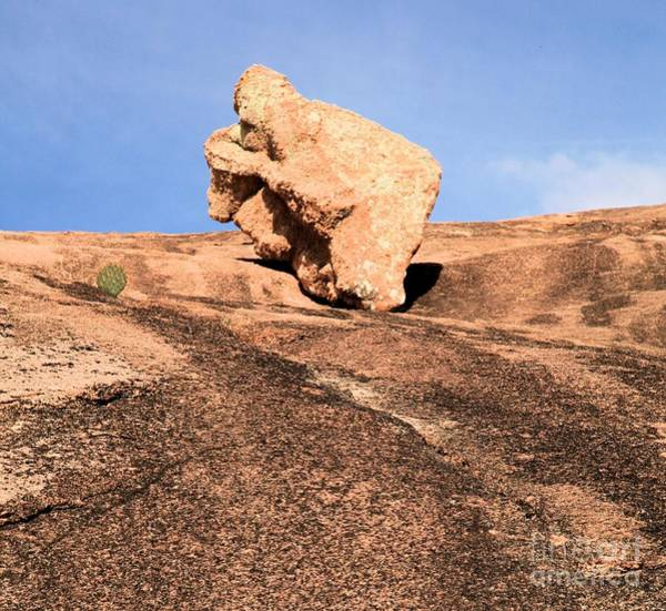 Enchanted Rock State Park Photograph - Cactus Leap Frog by Adam Jewell