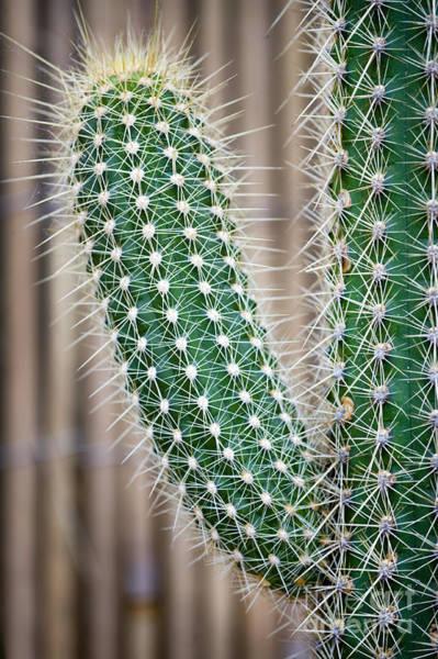 Succulent Photograph - Cactus by Lee Avison
