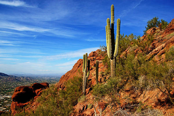 Camelback Mountain Photograph - Cactus On Camelback by Daniel Woodrum