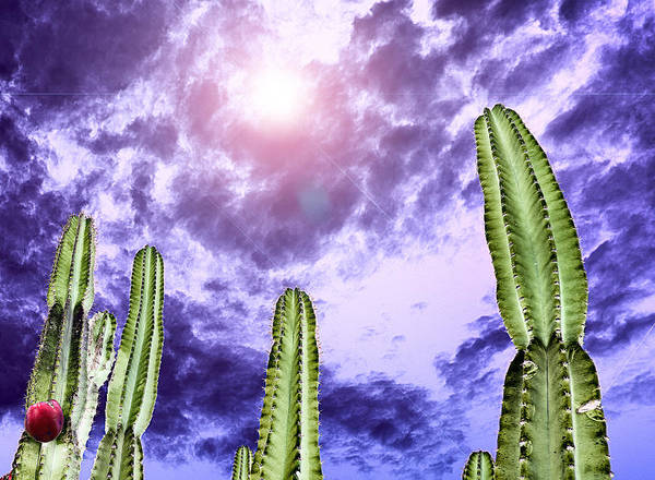 Photograph - Cactus by Russell Brown