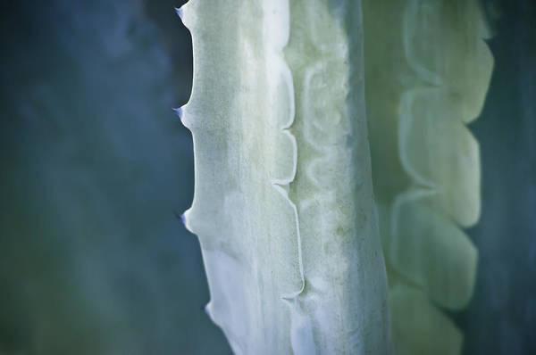 Photograph - Cactus by Sherri Meyer