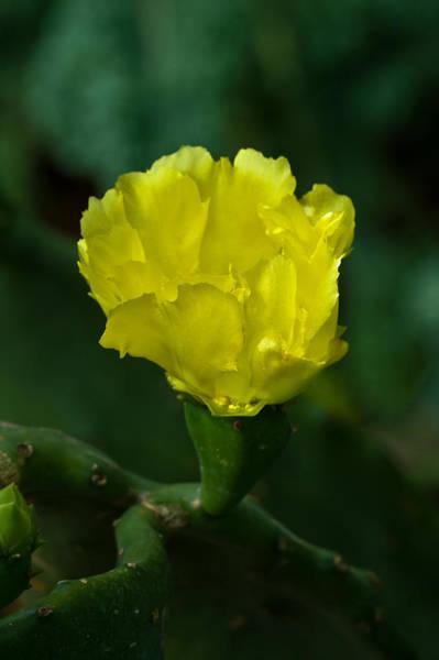 Photograph - Cactus Splendor by Ed Gleichman