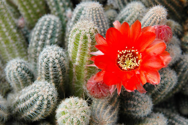 Photograph - Cactus With Orange Flower.  by Rob Huntley
