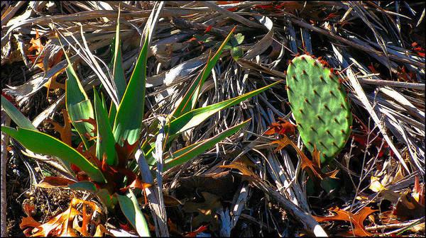 Photograph - Cactuscomp2 2009 by Glenn Bautista