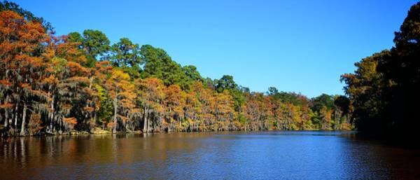 Photograph - Caddo Lake 1 by Ricardo J Ruiz de Porras