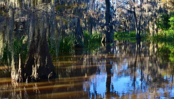 Photograph - Caddo Lake 18 by Ricardo J Ruiz de Porras