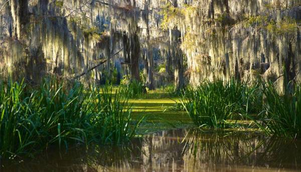 Photograph - Caddo Lake 19 by Ricardo J Ruiz de Porras