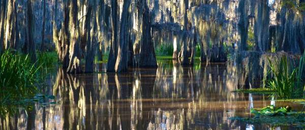 Photograph - Caddo Lake 20 by Ricardo J Ruiz de Porras
