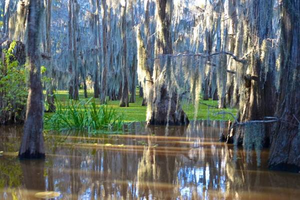 Photograph - Caddo Lake 21 by Ricardo J Ruiz de Porras
