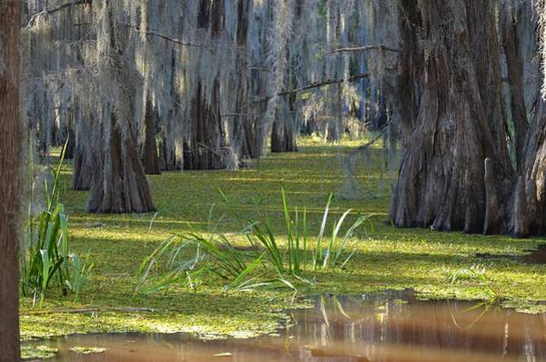 Photograph - Caddo Lake 24 by Ricardo J Ruiz de Porras
