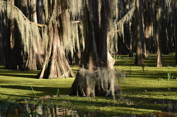 Photograph - Caddo Lake 26 by Ricardo J Ruiz de Porras