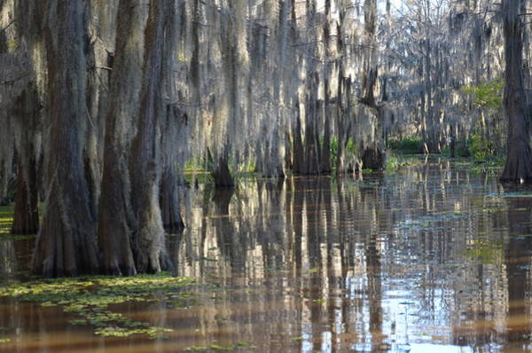 Photograph - Caddo Lake 27 by Ricardo J Ruiz de Porras