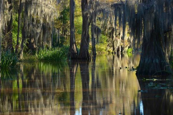 Photograph - Caddo Lake 29 by Ricardo J Ruiz de Porras
