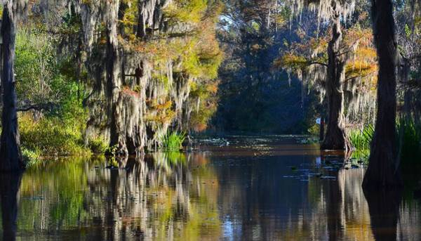 Photograph - Caddo Lake 30 by Ricardo J Ruiz de Porras