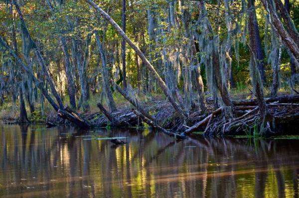 Photograph - Caddo Lake 32 by Ricardo J Ruiz de Porras